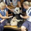 Відомі спортсмени і ... панда (ФОТО)